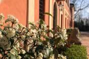 Villa Contessa Massari - dettaglio esterno
